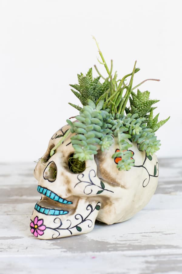 HalloweenSkullPlanter_1