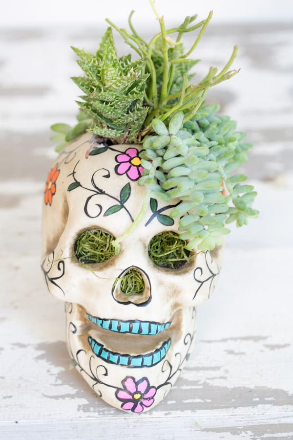HalloweenSkullPlanter_2
