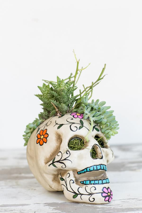 HalloweenSkullPlanter_3