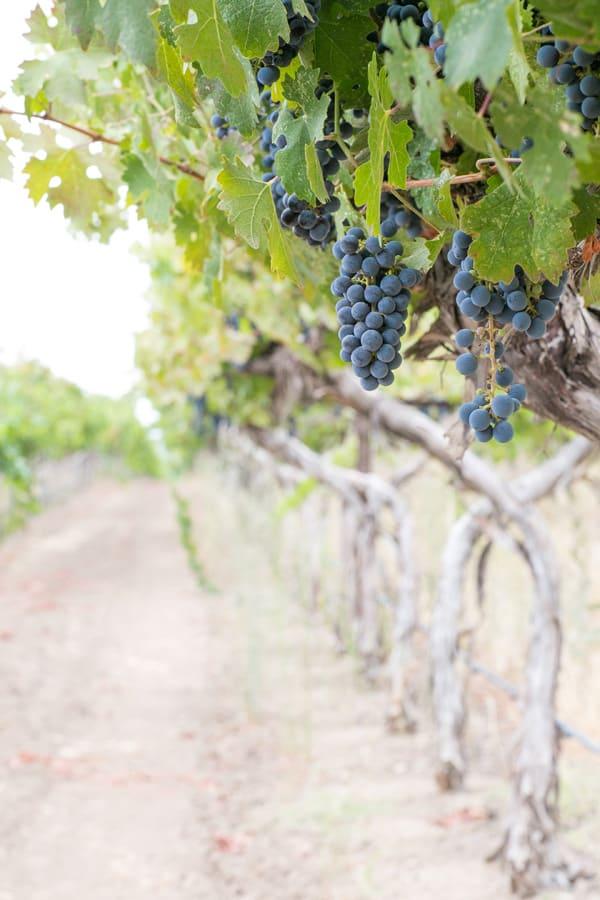 WineCountry_30