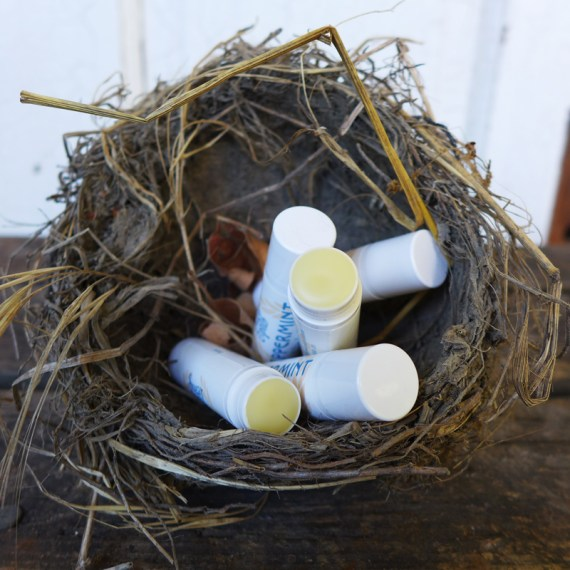 Sugar and Pith peppermint calendula lip balm, five tubes of lip balm in a bird's nest