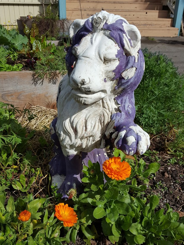 Sugar and Pith, weathered white and purple lion statue in a garden with calendula growing at its base
