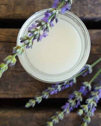 Sugar and Pith, Lavender and Vetiver Body Polish, an open jar of lavender and vetiver body polish is sitting on a rustic wood table with a sprig of lavender balanced on the top and a few stems at the bottom of the jar.