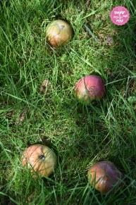 Äpfel3