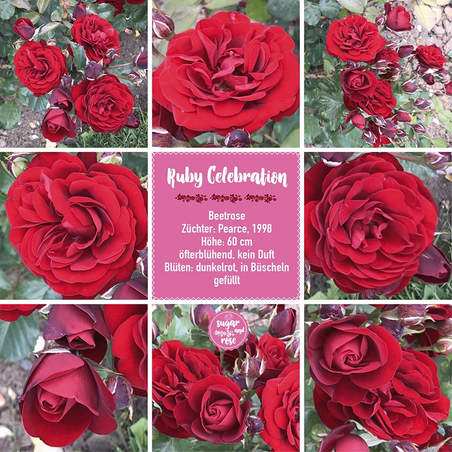 Ruby Celebration