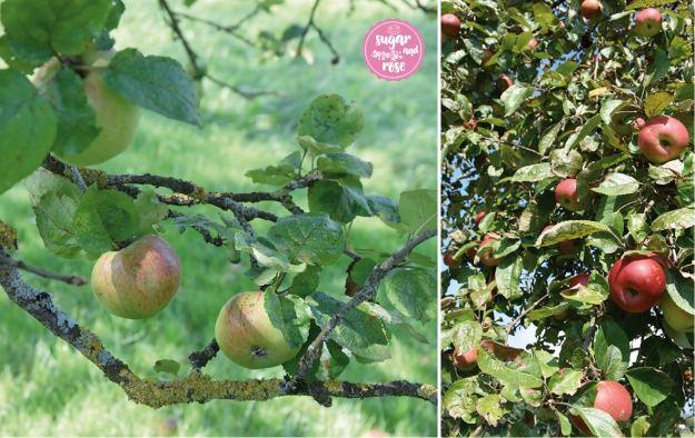 oö-äpfel