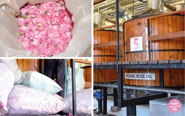 Rosenöl-Destillerei