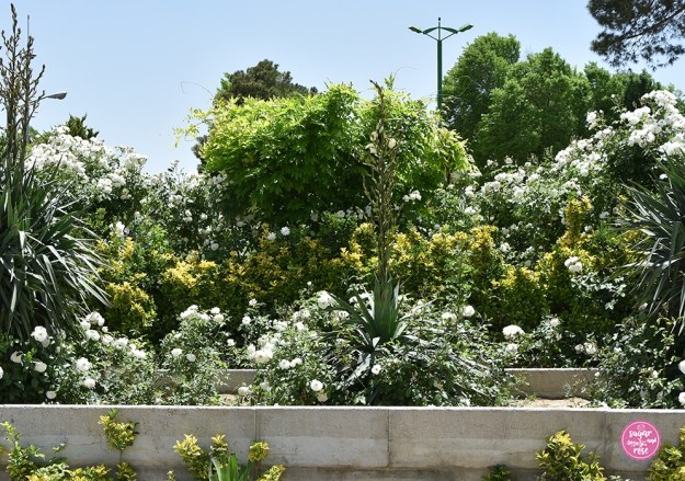 Schneewittchen-Rose und Yucca-Palmlilien, Persien und Rosen