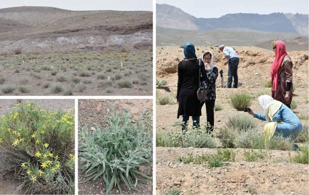 Die Wüste in Persien blüht
