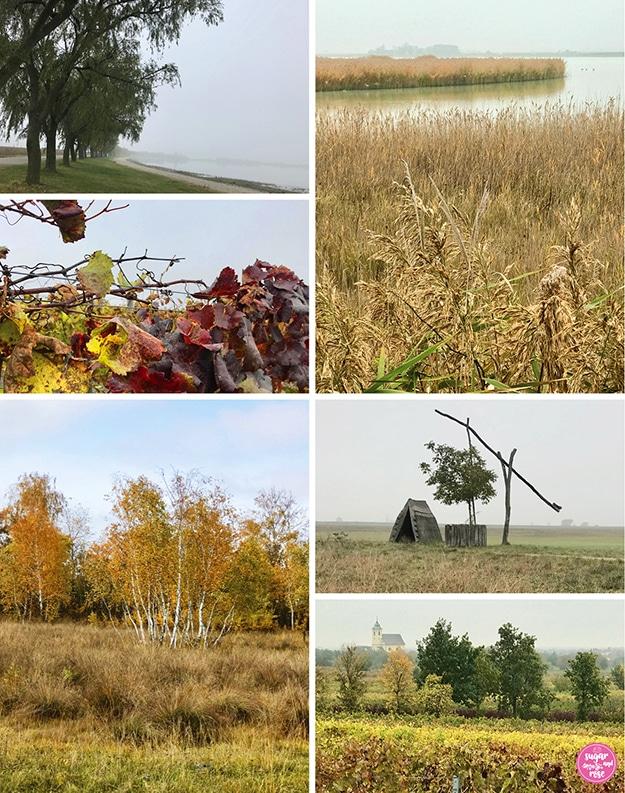 Burgenland-Aufnahmen: Weiden am nebeligen See, darunter rot-gelbes Weinlaub, eine Schilfinsel im Neusiedler See, ein panonnischer Brunnen, einige goldgelbe Birken und ein Weingarten mit Kirche