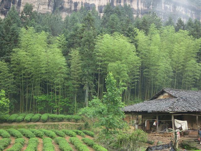 wuyi-shan