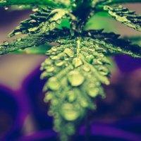 Agenda fin de semana: ExpoWeed 2017 Feria del cannabis