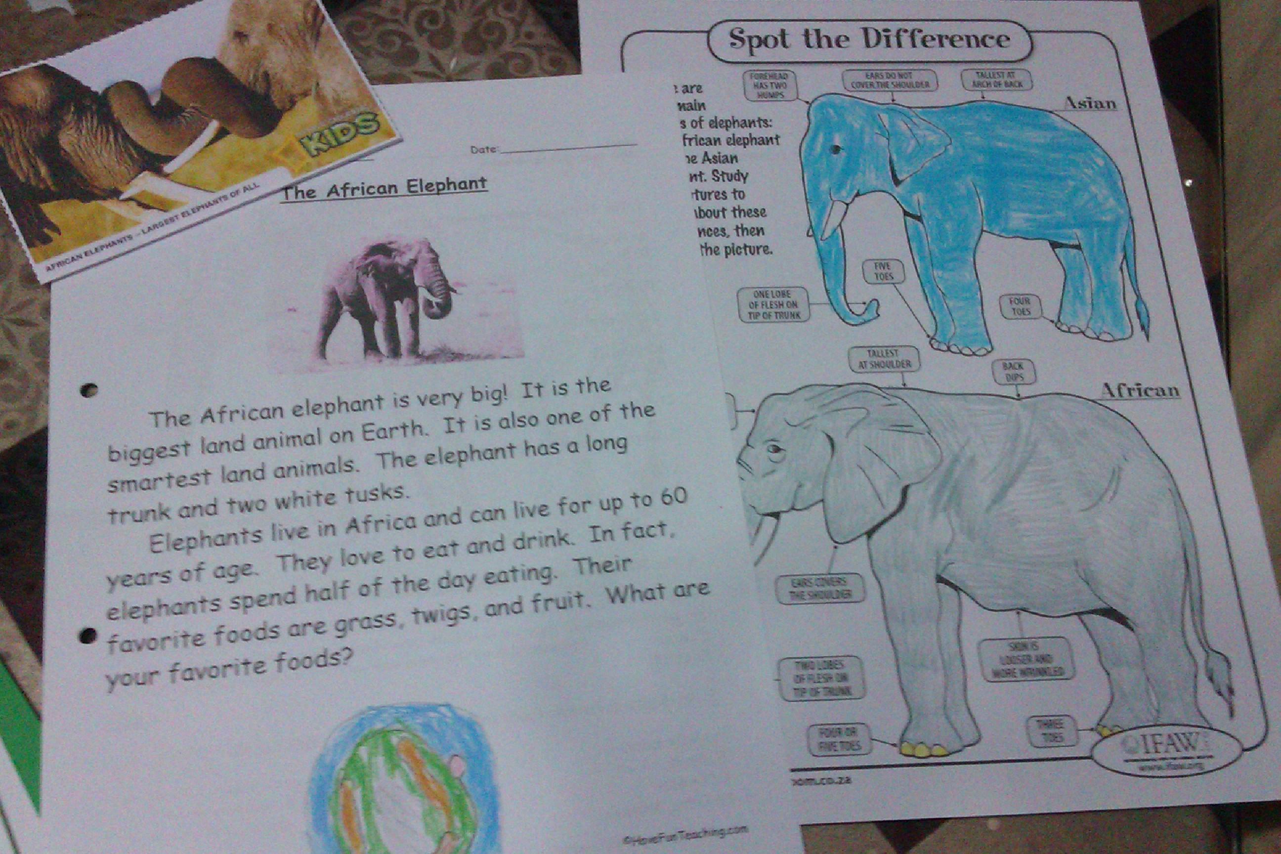 Mammal Stu S Elephant Lapbook