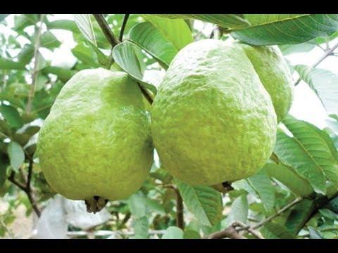 Top 10 Fruits for Diabetes Patients