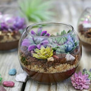 Edible Terrariums | From SugarHero.com