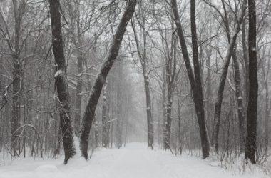 Winter Tree ID Workshop @ Limnology Lab
