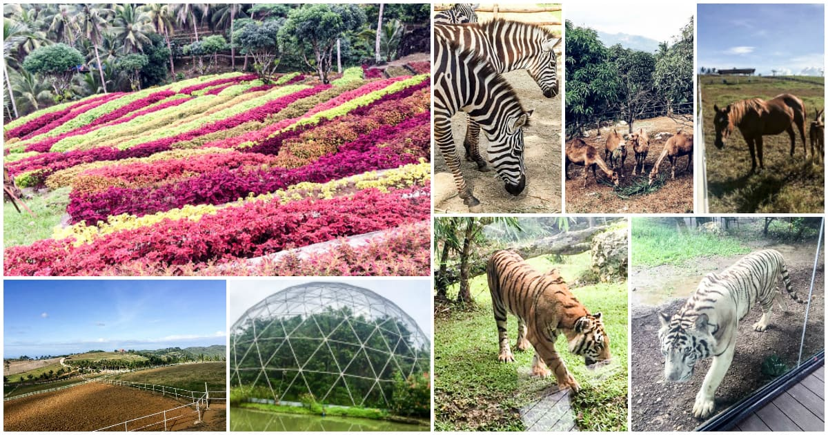 "Cebu Safari and Adventure Park in Carmen opening in ""early 2018"""