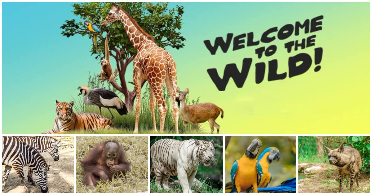 Cebu Safari and Adventure Park, the BIGGEST ZOO in the Philippines