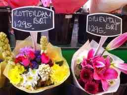 holland-tulips