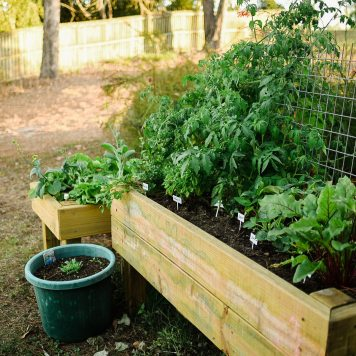 Our Veggie Garden - Suger Coat It 6