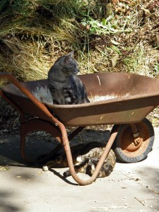 Wheelbarrow play