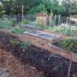 layered beds with seedlings