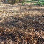 wood chip beds