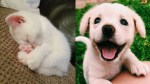 【犬猫動物動画まとめ】Cute baby animals Videos   Cute kitten sleeping And puppy laughing   Soo Cute! #87