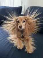 【犬猫動物動画まとめ】Dog's Hair Stand Up Funnily After She Wraps Herself in Fleece Blanket