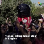 "【犬猫動物動画まとめ】""Negro Matapacos"" Has Turned Into A Symbol For Social Struggles In Chile"