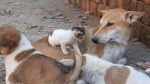 【犬猫動物動画まとめ】BABY CAT$and DOG@ funny video,Orphan,DOGS LOVE WITH CAT,angry cat,big dog FUNNY....2020:-