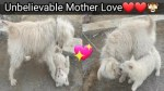 【犬猫動物動画まとめ】Mother Dog and Cute Puppy | Mother dog don't leave his baby | Aya Info