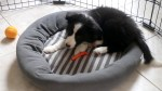 【犬猫動物動画まとめ】New Puppy Tips: 7 Lessons in 7 Days