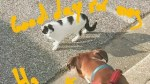 【犬猫動物動画まとめ】Puppy says hello to his feline neighbor 🐈 🐕