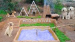 【犬猫動物動画まとめ】Building a Mud House For Dog And Fish Pond Around House Puppy With Ancient Skills