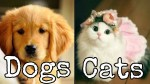 【犬猫動物動画まとめ】Cute Cats And Dogs 🐶 Kittens 😻 Funny Animals