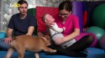 【犬猫動物動画まとめ】Cute Therapy Dog Brings Smiles to Children Going Through a Tough Time