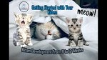 【犬猫動物動画まとめ】Getting Started with Your Kitten - Kitten Development From 6 to 12 Weeks #1- Cute Cats