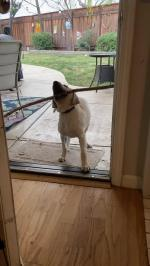 【犬猫動物動画まとめ】Puppy Struggles To Get Wooden Stick Through The Door