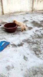 【犬猫動物動画まとめ】Doggy Tears Around Rooftop With Its Favorite Tub