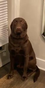 【犬猫動物動画まとめ】Dog Makes a Sad Face When Owner Gives Them a Time-Out for Chewing on Bench