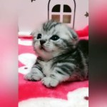 【犬猫動物動画まとめ】This Tiny Squeaky Kitten Will Leave You Squealing With Joy