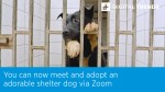 【犬猫動物動画まとめ】You can now meet and adopt an adorable shelter dog via Zoom