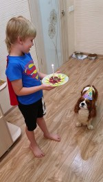【犬猫動物動画まとめ】Birthday Celebration For Family Dog
