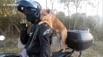 【犬猫動物動画まとめ】Pet dog learns to ride on owner's shoulders during motorcycle rides
