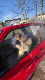 【犬猫動物動画まとめ】Dog Sitting Inside car Tries to Grab Water Hose in Mouth