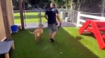 【犬猫動物動画まとめ】Service Dog Trainer USA- Dog Obedience Training- Fine Line Family K-9