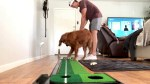 【犬猫動物動画まとめ】Excited dog is very happy for Texas man's putting prowess