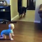 【犬猫動物動画まとめ】Cute Baby playing with a dog