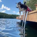 【犬猫動物動画まとめ】Dog Trips From Dock And Falls in Water While Chasing Ball